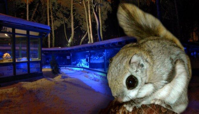 """Тиха рижская ночь, но пищу надо перепрятать. Топ-3 причин сходить в Рижский зоопарк """"ночью"""""""