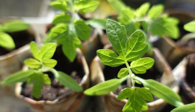 Зеленее некуда: 9 предметов, в которых можно проращивать семена
