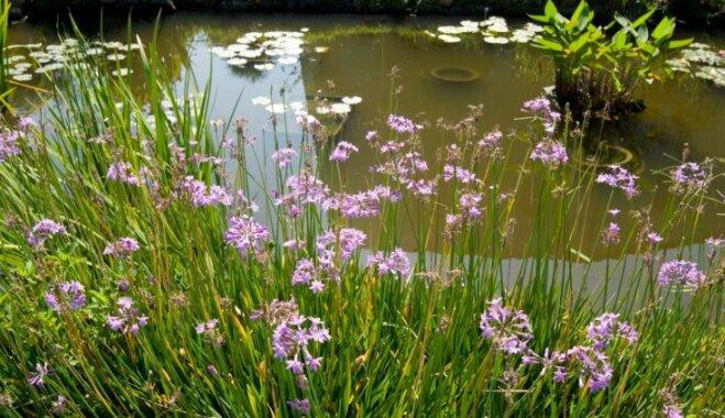 Зимний пруд в саду: спасаем растения и рыб от кислородного голодания