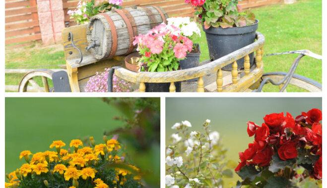 Dārzs bez sloga: skaisti iekopts īpašums Bauskā