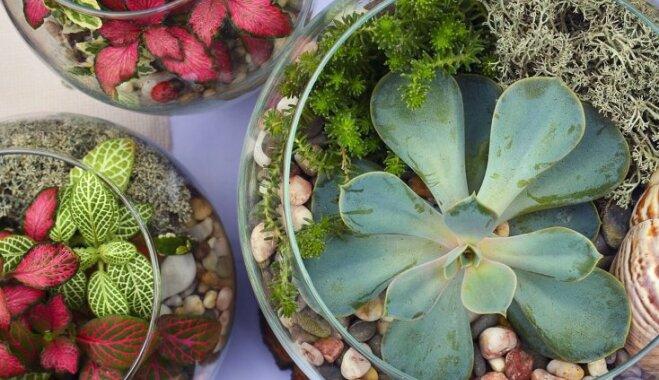 5 ошибок при выращивании суккулентов и как их избежать