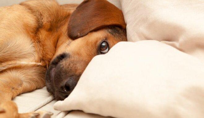 Семь причин, по которым заводить собаку вам пока не стоит
