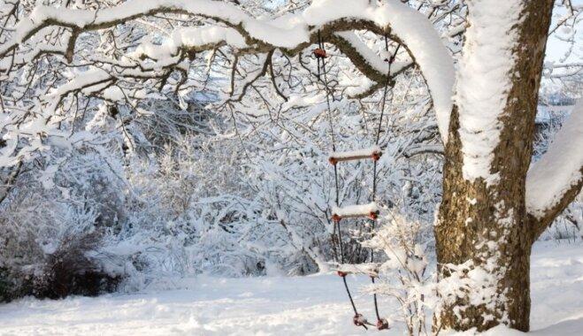 Ne tikai sniegs – kā radīt pasakainu ziemas dārzu