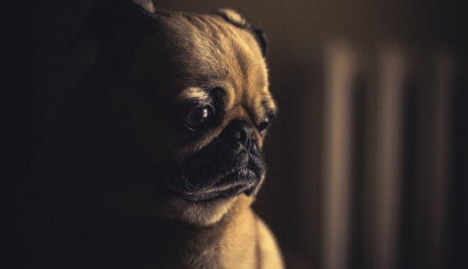 Ko mēs varam pagūt, līdz pilnā balsī ierejas Suns?