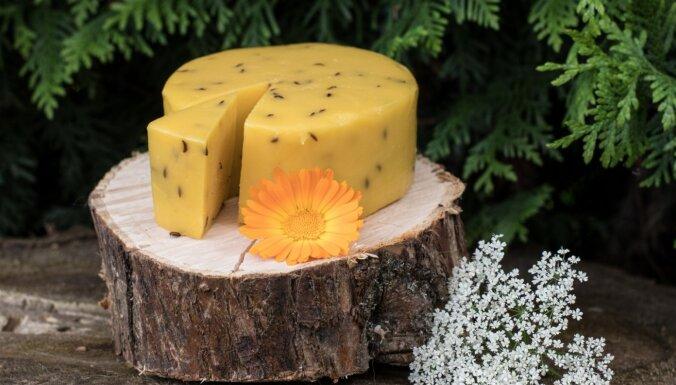 Miķeļdienas ražas svētki Brīvdabas muzejā vilina ar lauku sieriem un kāpostu pesto