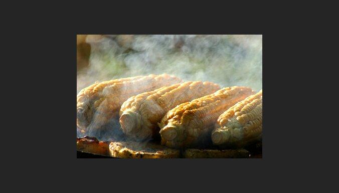 Kukurūzas vālītes uz grila. Foto: Griszka Niewiadomski