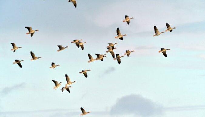 Latvijas Ornitoloģijas biedrība saņem atbalstu kapacitātes stiprināšanai