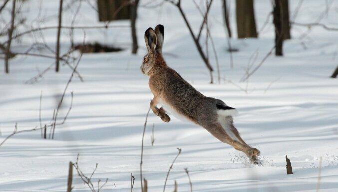 В ближайшие дни Латвию ожидает снег, к выходным — похолодание до -20 градусов