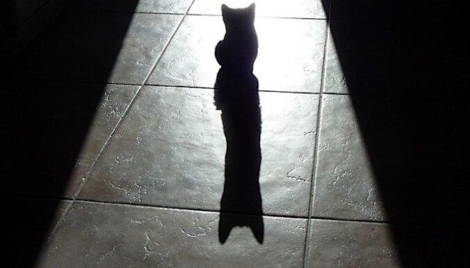 Во Франции мужчину отправили в тюрьму за покалеченного котенка
