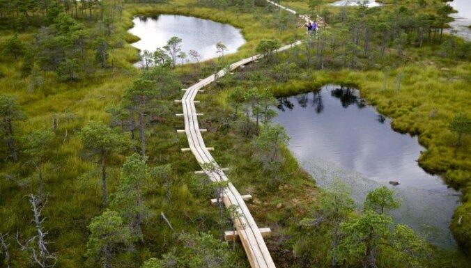 В гостях у собаки Баскервиллей. Топ-6 самых красивых болотных троп Латвии