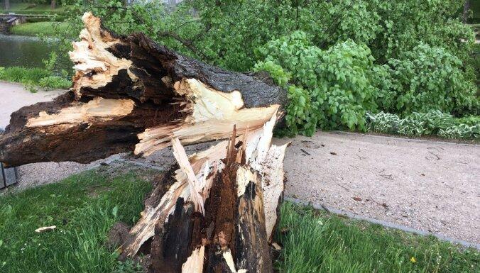 Izlauzti koki un norauti jumti - ziņo 'Delfi Aculieciniekam' par negaisa postījumiem