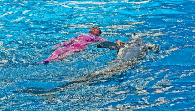 Sea World delfīnu šovs