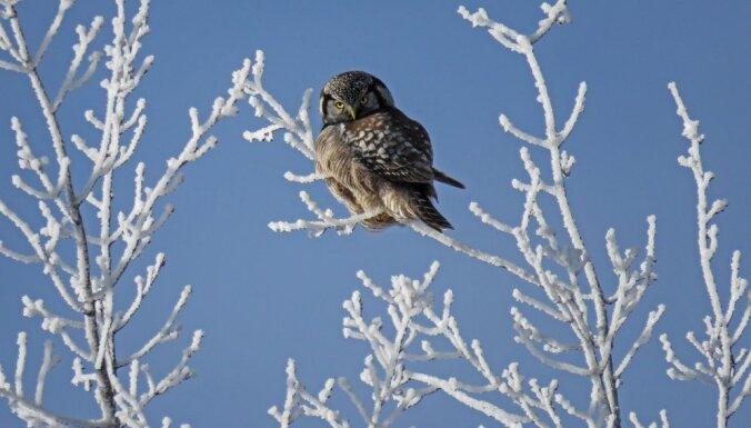 Kā saglabāt veselību tieši ziemas sezonā?