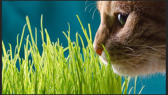 Кошка и комнатные растения, или Как обеспечить безопасное сосуществование?