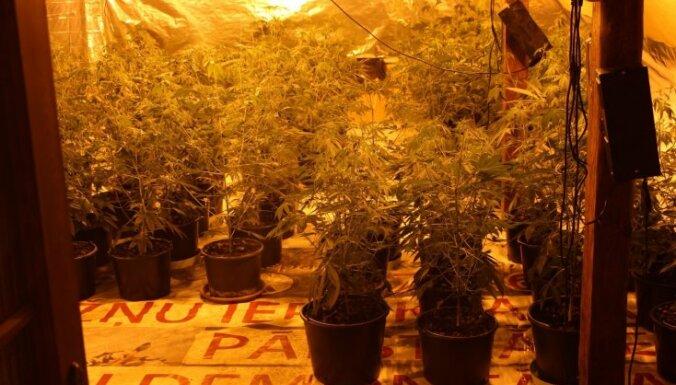 """Под Тукумсом обнаружена ферма марихуаны и 10 кг сырой """"травки"""""""