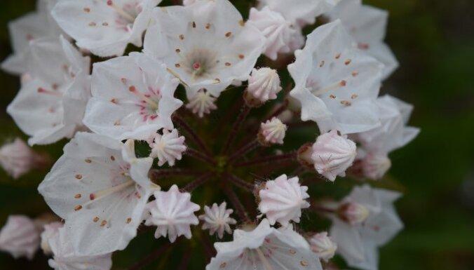 10 прекрасных цветов, которые безжалостно убивают людей