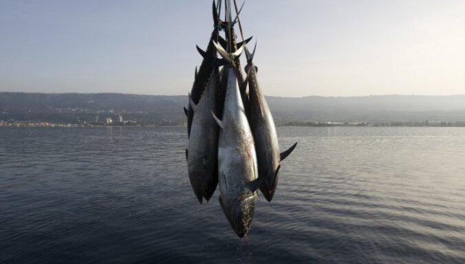 Радиоактивный тунец из Японии выловлен в США