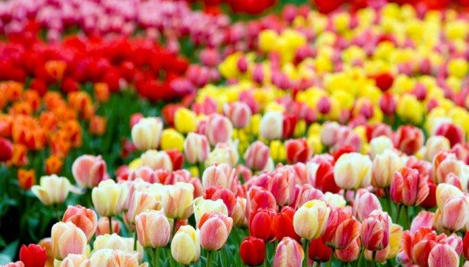 Фирма по продаже цветов отмывала деньги: арестовано имущество на 4,5 млн. евро
