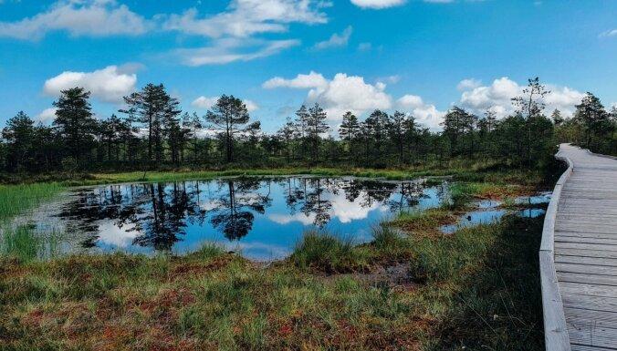 Foto: Gleznainā Viru purva taka Igaunijā, kur pat apmaldīties ir forši