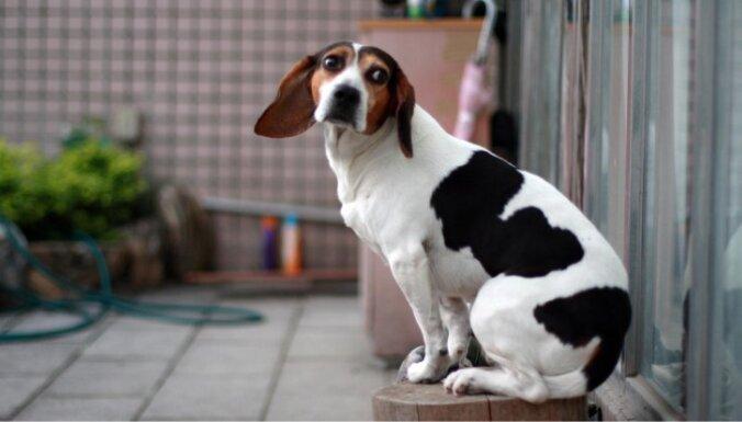 Sešas lielas saimnieku kļūdas audzināšanā, kuru dēļ suns kļūst nelaimīgs