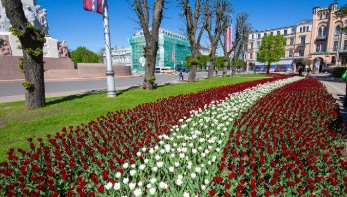 ФОТО. У Памятника свободы в честь 100-летия Латвии цветут тюльпаны и гадючий лук