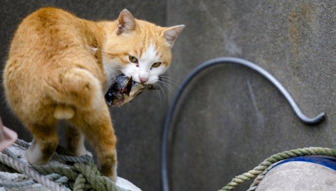 В Бельгии принудительно стерилизируют всех котов и кошек