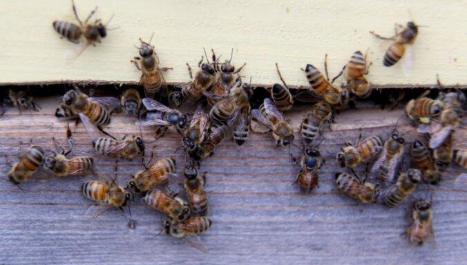 ANO un ES aicina uz globālu rīcību bišu aizsardzībai