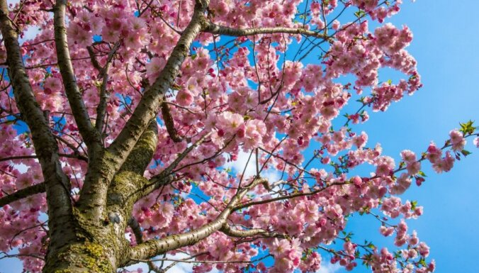 Kā vārds ietekmē tavu dzīvi: Ziedonis