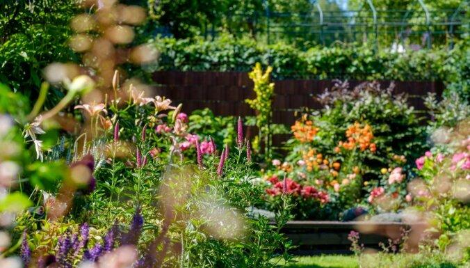 Krāšņi dārzi un iedvesmojoši audzētāji: 2020. gada ciemošanās stāstu izlase