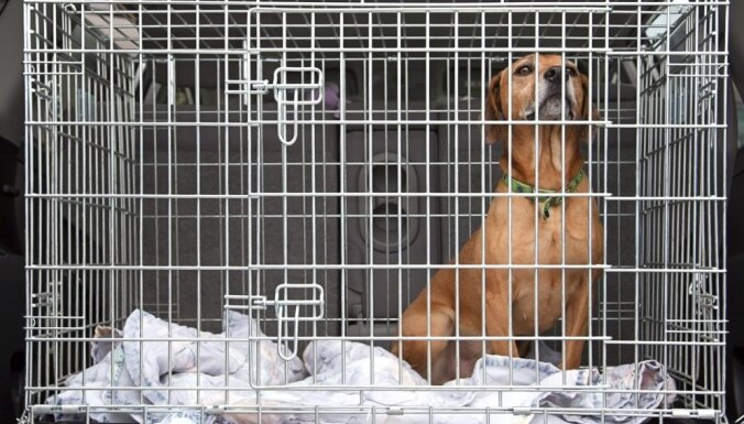 Собака в клетке — благо или зло? Девять фактов о необычном для Латвии феномене