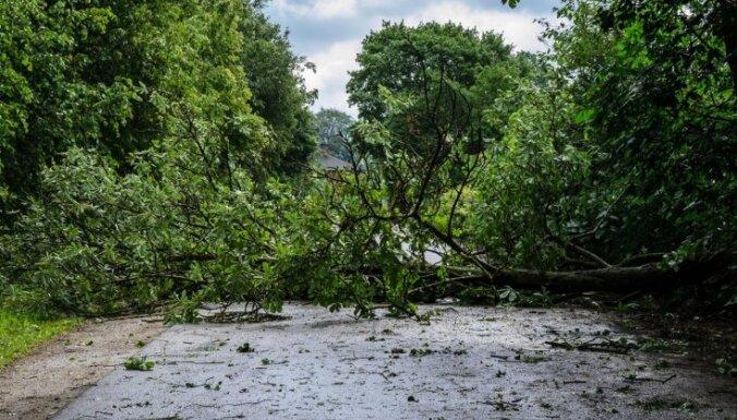 Синоптики: Во второй половине дня ветер будет ломать деревья, возможны перебои с электричеством