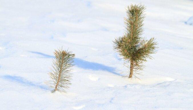 Ceturtdien sākas astronomiskā ziema