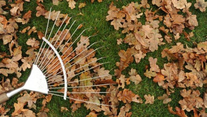 Dārza darbu kalendārs: novembris
