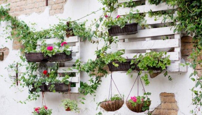10 oriģinālas idejas, kur dārzā izmantot koka paletes