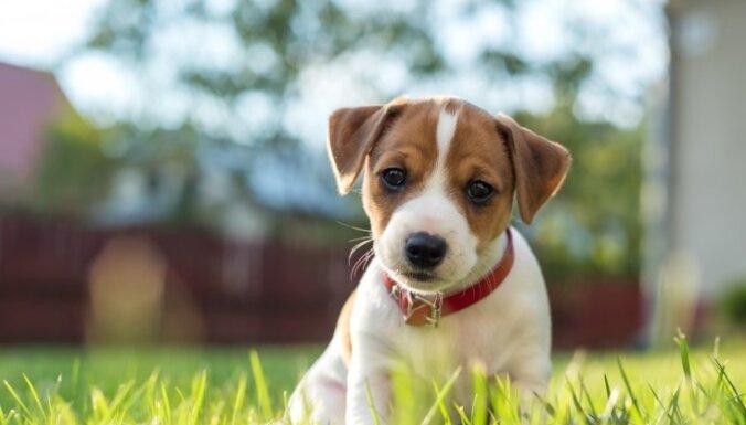 Svarīgi jautājumi, kas jāņem vērā pirms suņa iegādes
