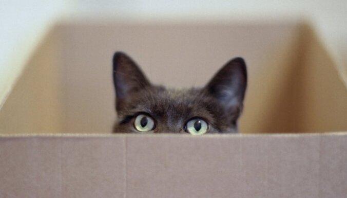 Поправки к закону позволят отстреливать бродячих котов