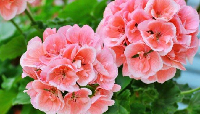 Nočiept zariņu – pieci augi, kurus viegli varēsi izaudzēt savās mājās