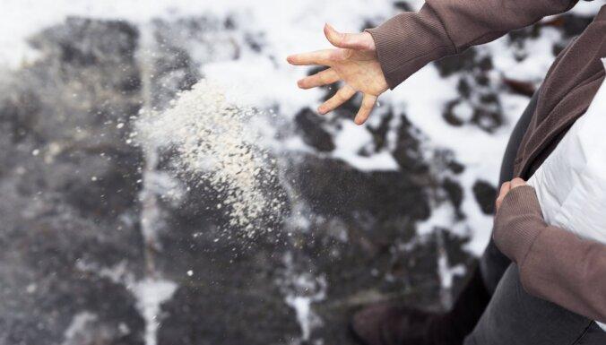 Рига может частично отказаться от посыпания дорог солью: в ряде мест уже не могут нормально расти насаждения