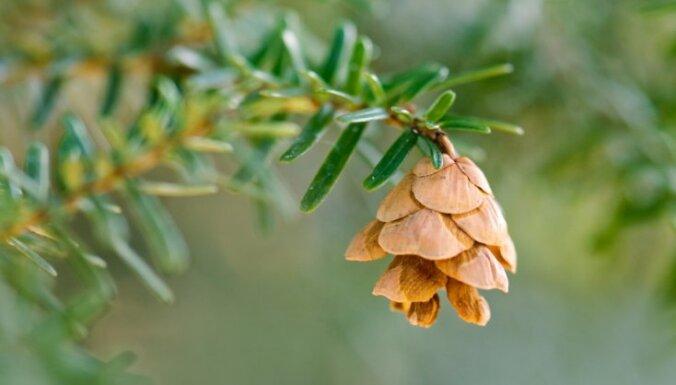 Фенолог: шишки и хмель показывают, что осень будет сухой и долгой, а морозы начнутся лишь после Нового года