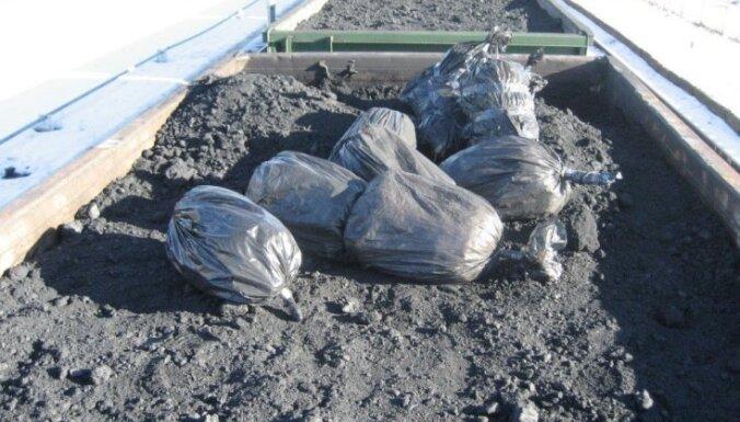 Foto: VID akmeņogļu kravās atrod 215 tūkstošus kontrabandas cigarešu