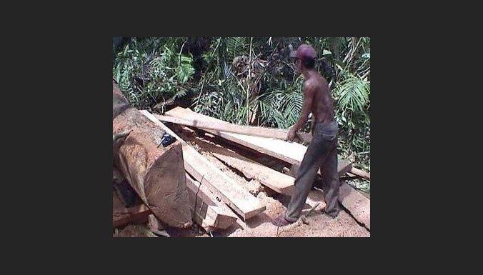 Indonēzijā katastrofāli sarūk aizsargāto mežu platības