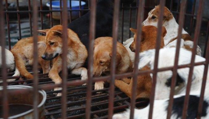 Vjetnamas galvaspilsētā aicina iedzīvotājus atturēties no suņa un kaķa gaļas