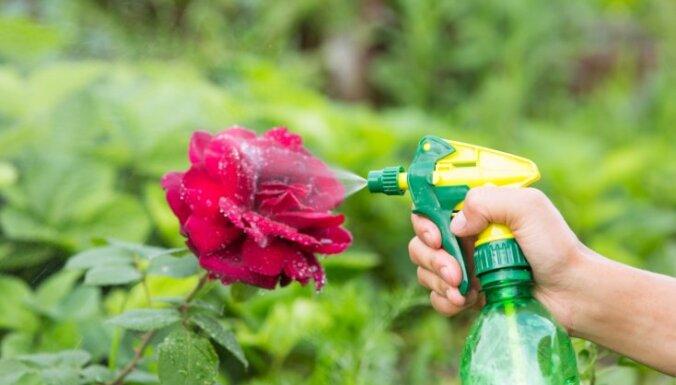 Laputis dārzā. Padomi, kā efektīvi cīnīties ar kaitēkļiem