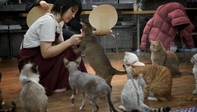 Jauns modes 'kliedziens': sešas labākās kafejnīcas ar kaķiem Eiropā
