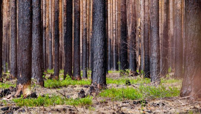 Вчера в Саулкрастском крае горел лес площадью 1500 кв. м