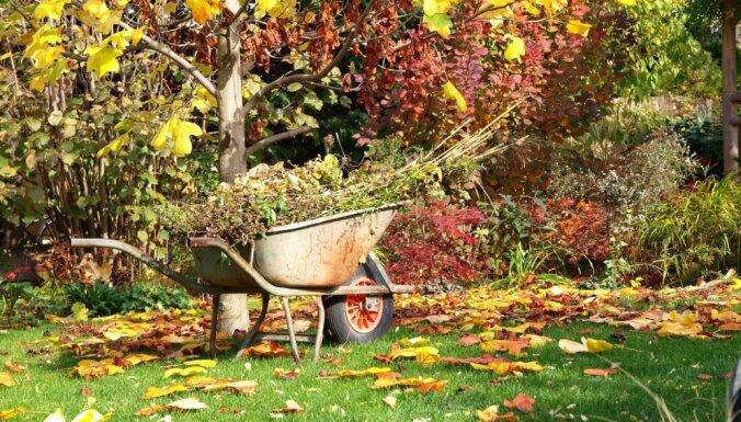 Mārupes novadā oktobra izskaņā un novembrī bez maksas varēs nodot lapas, zarus un zāli