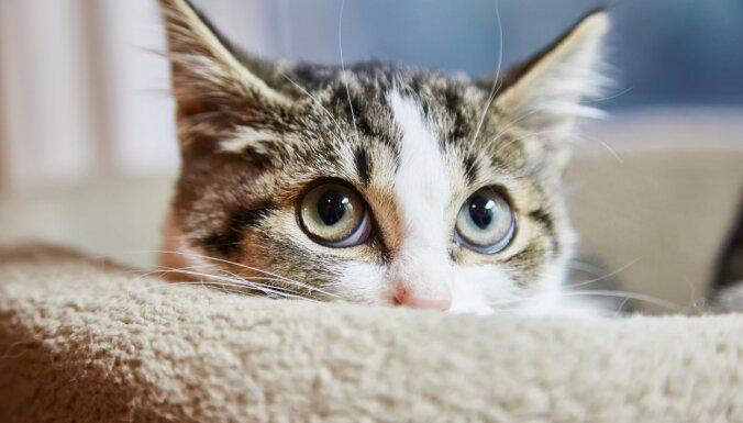 Мурминатор. Самый крутой кот Великобритании пережил три покушения