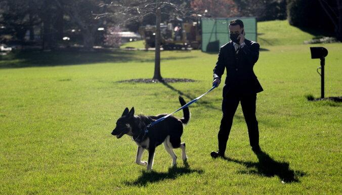 Собака Байдена снова укусила сотрудника Белого дома
