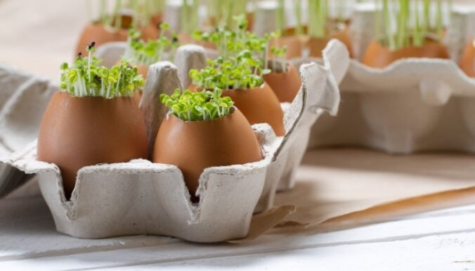 Zaļo asnu spēks: Kā diedzēt sēklas ēšanai?