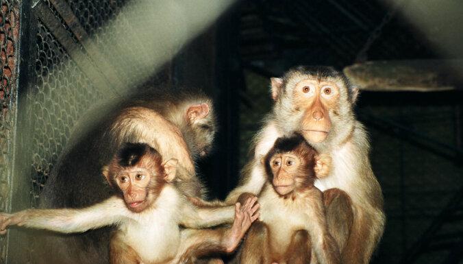 ФОТО. Рижский зоопарк лишится 110-летнего домика обезьян. Что появится вместо него?